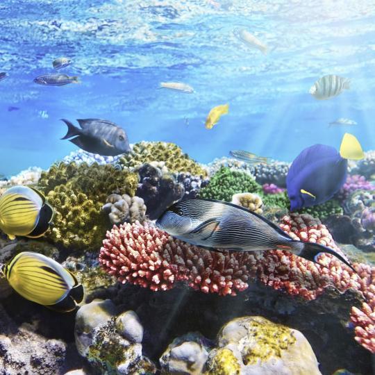 Mooloolaba's Underwater World