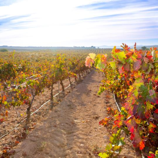 Ruta del vino Utiel - Requena