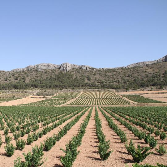 Jumilla Wine Route