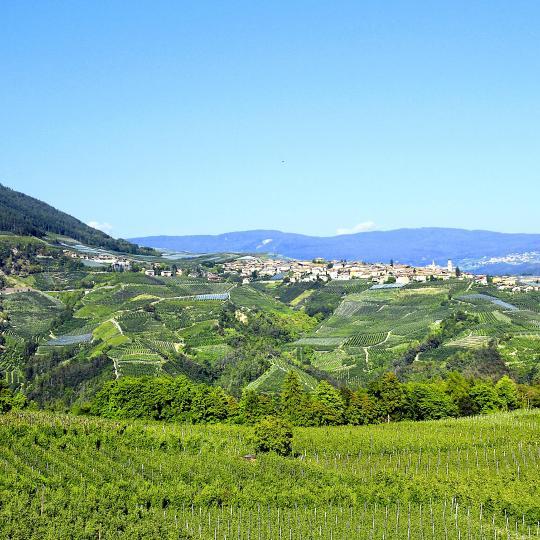 Tastes of Trentino