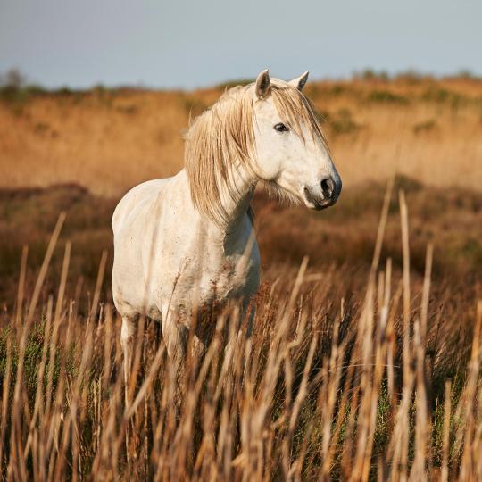 Horseback riding in Camargue