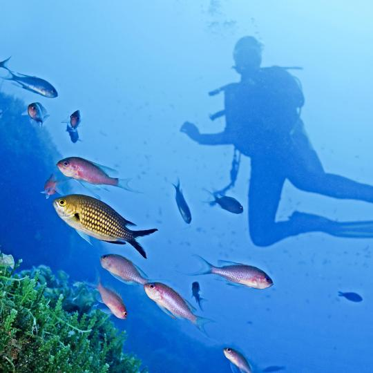 Diving adventures in the Cinque Terre Marine Protected Area
