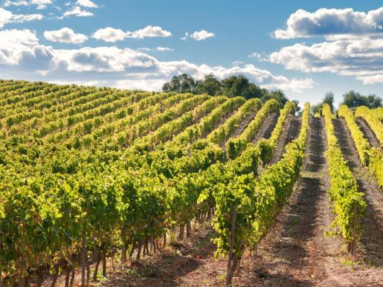 La Rioja Alta: la tentación vinícola de España