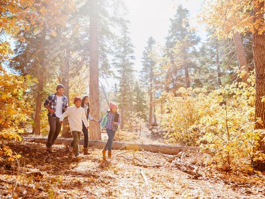 Europas Top 6 bezaubernden Urlaubsziele im Wald