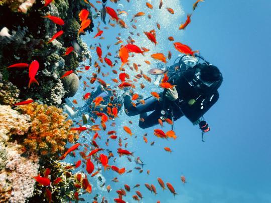 Destinos para mergulhos em recifes de corais