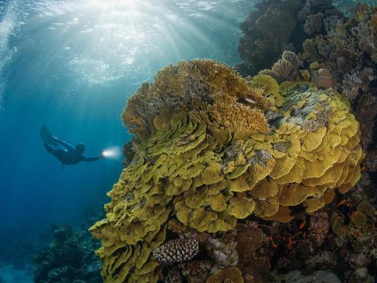 De beste reisemålene for dykking i Rødehavet
