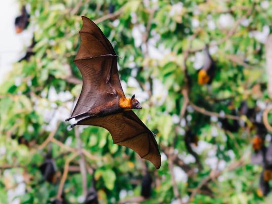 Parimad paigad maailmas nahkhiirte vaatluseks