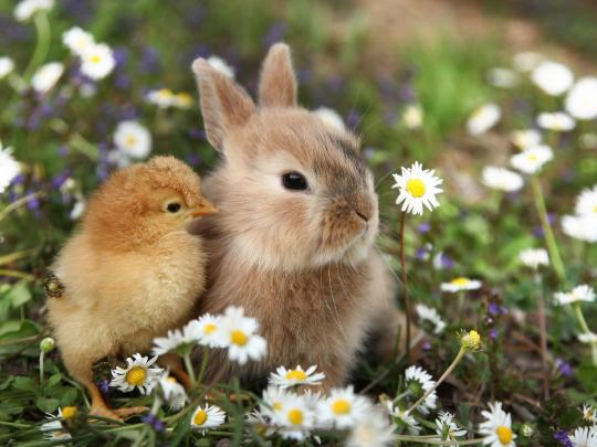 Tempat hebat melihat anak haiwan pada musim bunga