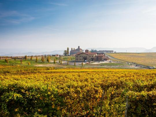 7 wine destinations to visit during the harvest