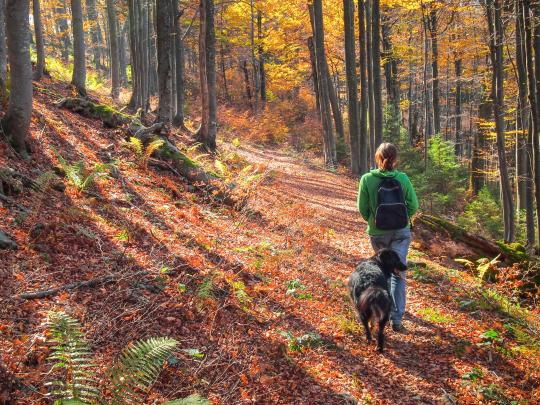7 destinos para viajar con mascotas