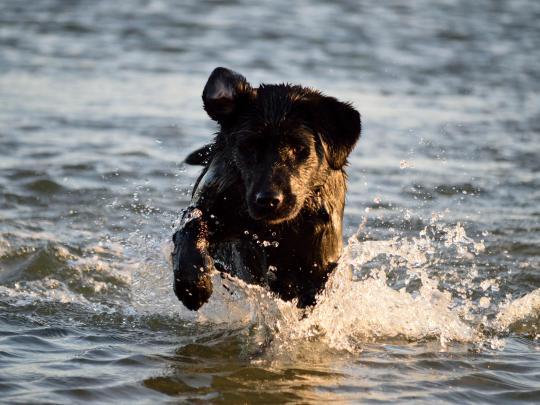 Las mejores playas de España para ir con tu perro