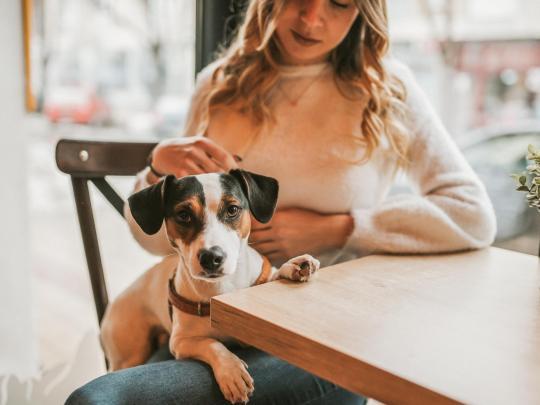 Ristoranti e locali pet-friendly a Roma