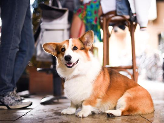 LA's Best Pet-friendly Cafés and Restaurants