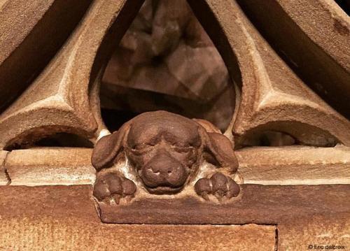 Cathédrale, le chien de Geiler qui vous porte bonheur si vous le caressez
