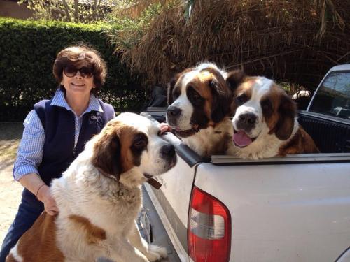 Amanda y mis mascotas