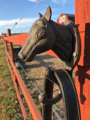 Live on a Horse Farm