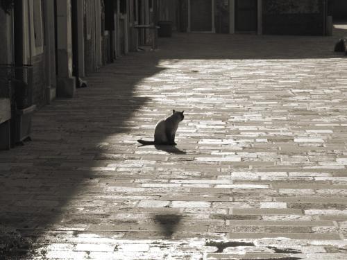 Venice Lion Residence