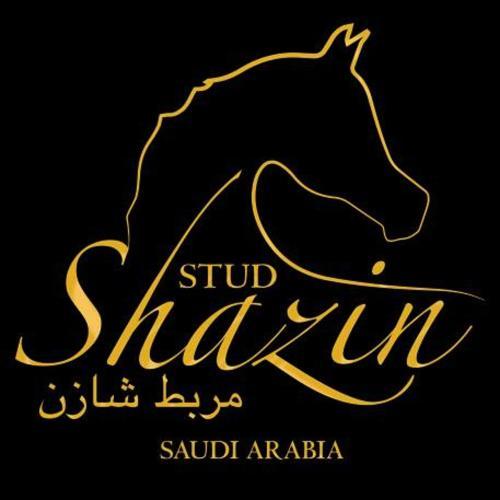 SHAZIN STUD
