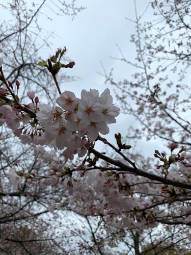 guest house sakura